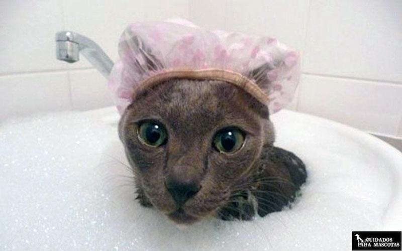 Gatos que les encanta el agua