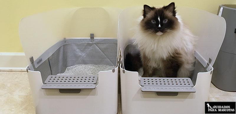 Revisa el comportamiento de tu gato en el arenero