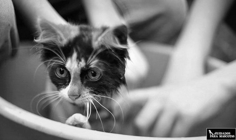 Trucos para bañar a tu gato