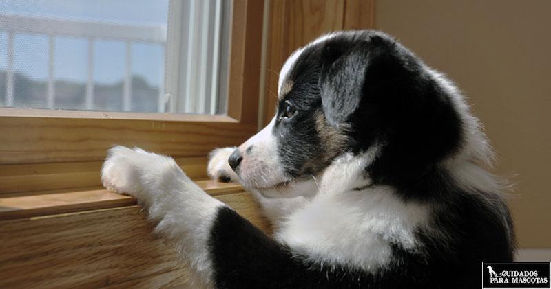 Tu perro ladra cuando no estás en casa si se aburre