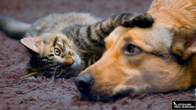Dale compañía a tu perro