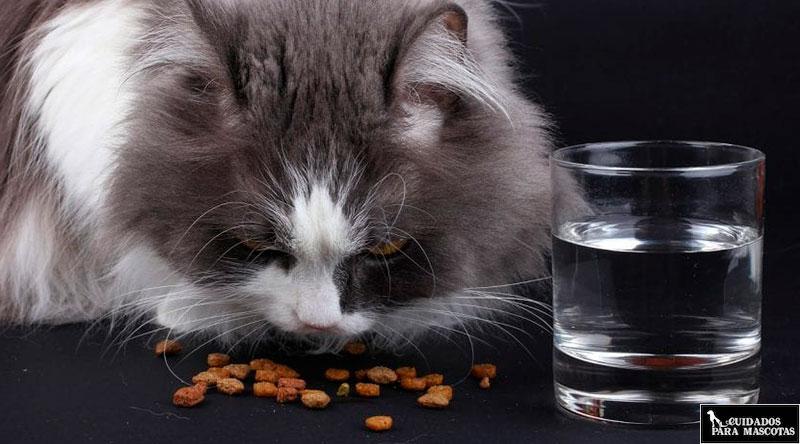 Elige bien el pienso para gatos esterilizados