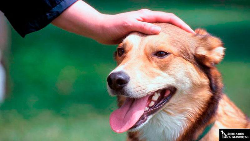 Revisa diariamente a tu perro