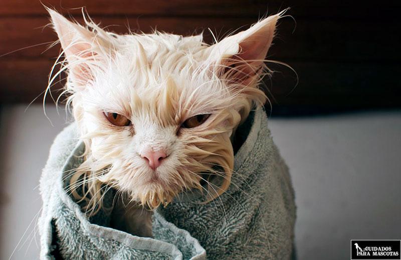 La importancia del secado tras el baño
