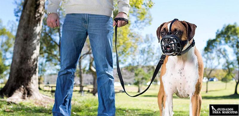Bozal baskerville Ultra para perros