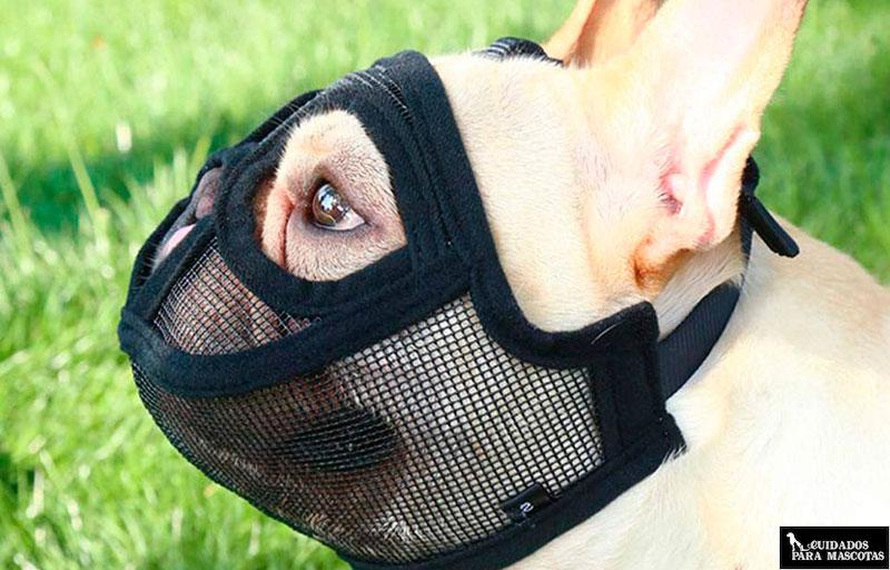 Como elegir un bozal cómodo para perros braquicéfalos