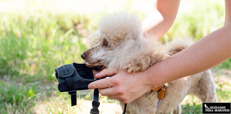 Aprende a poner un bozal a tu perro