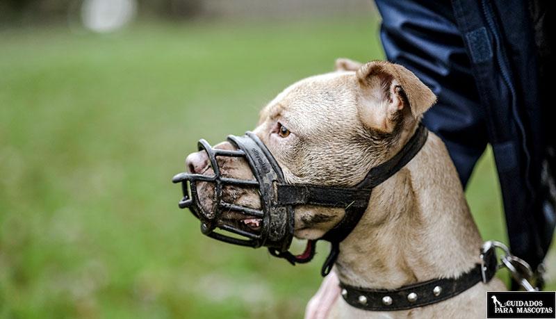 El mejor bozal para tu perro