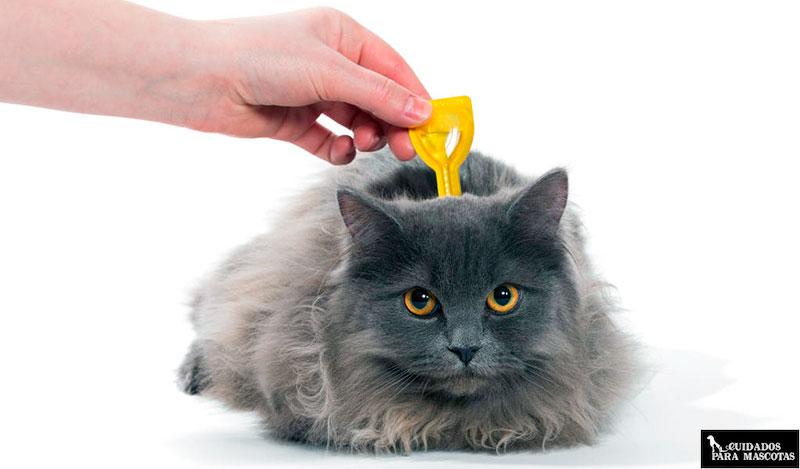 Desparasitación gato