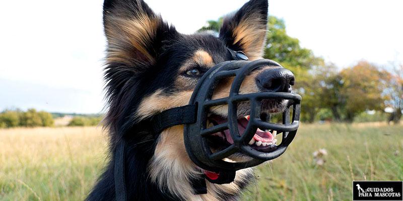 Como elegir un bozal cómodo para tu perro