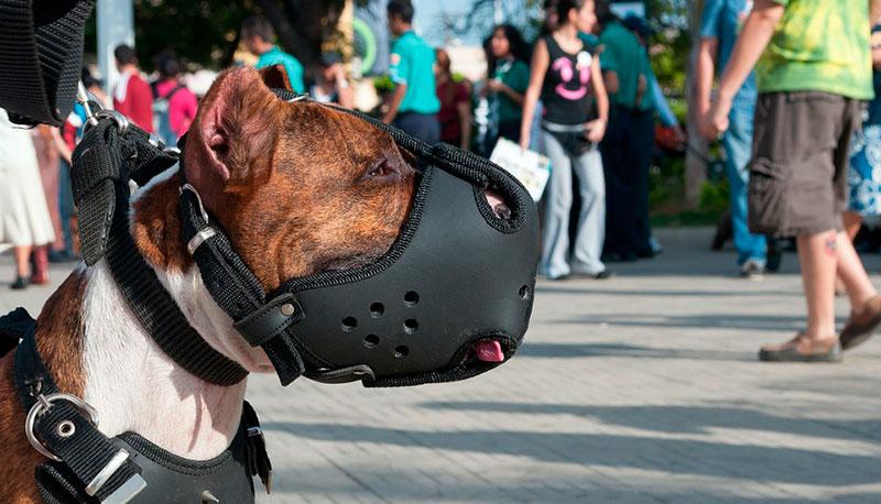 como elegir un bozal para un perro potencialmente peligroso
