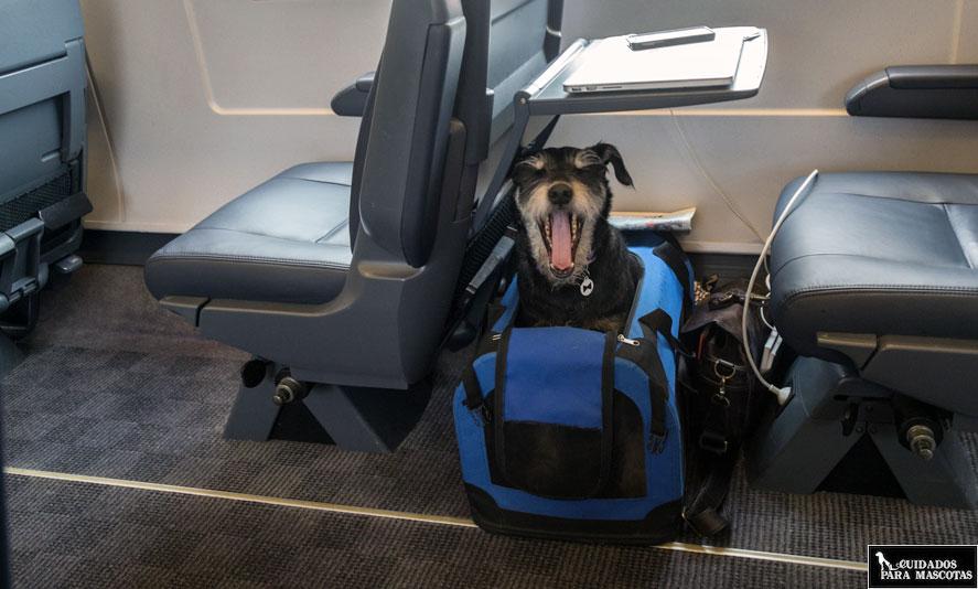 Perro viaja en tren