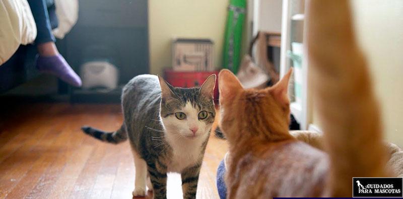 Problemas de comportamiento, uno de los motivos por los que tu gato no tapa las cacas