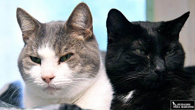 Qué hacer cuando termina pelea gatos