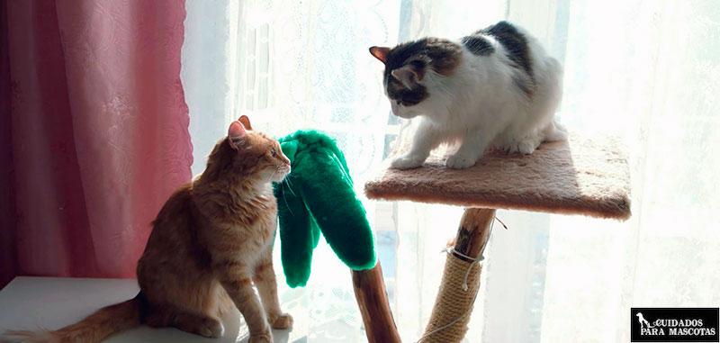 Averigua si tus gatos se pelean o están jugando