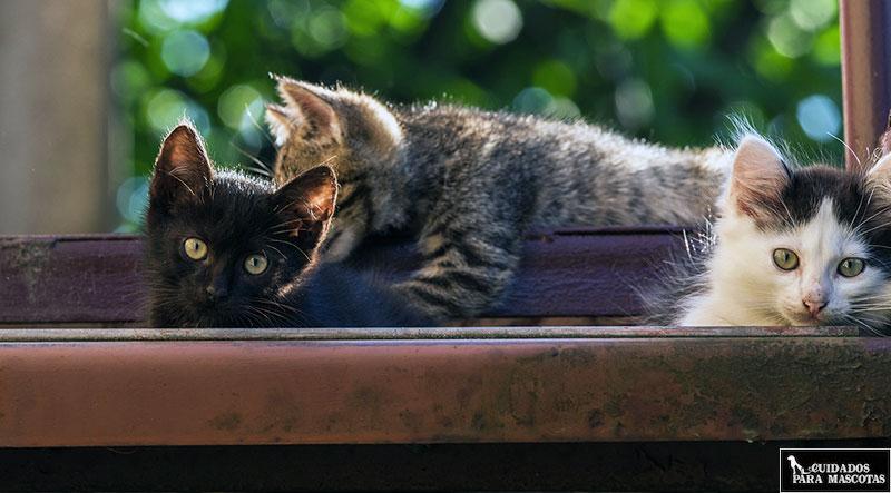 Así puedes evitar las peleas de gatos en casa