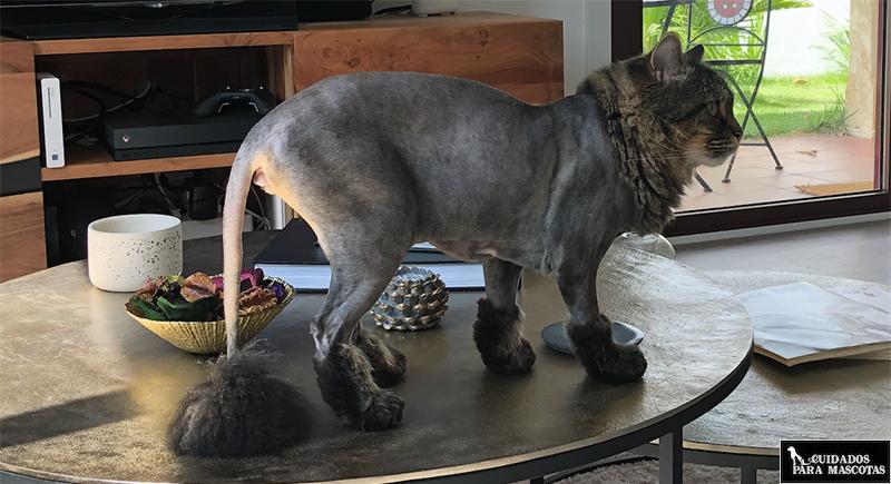 Consejos para cortarle el pelo a tu gato