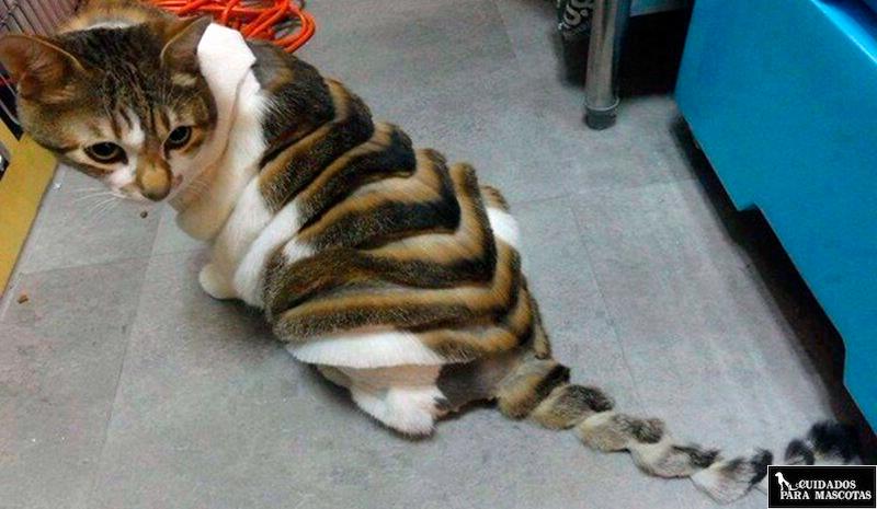 Gato en peluquería felina