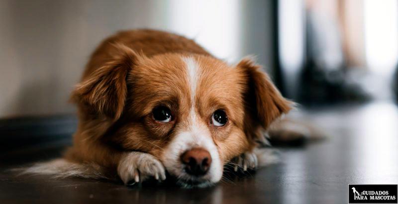 Cubre las necesidades básicas de tu perro