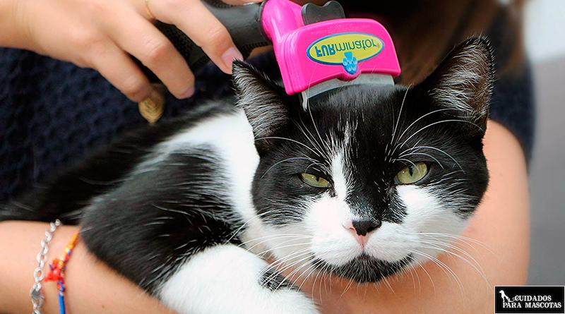 Así debes cuidar el pelo de tu gato