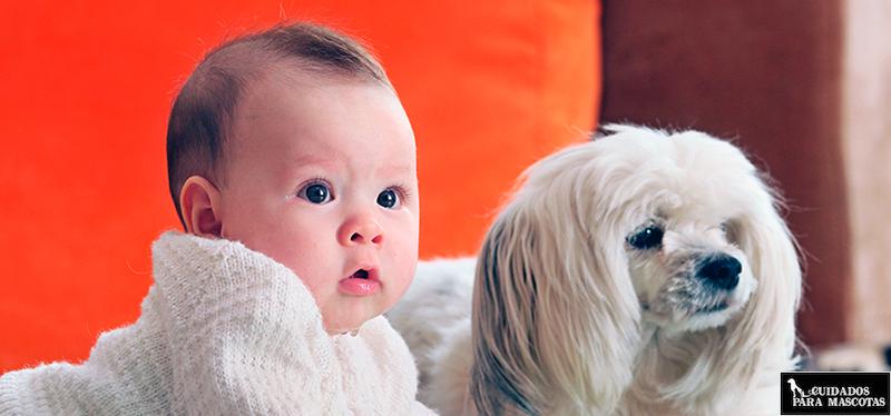 Un nuevo miembro en la familia puede hacer desaparecer el apetito de tu perro