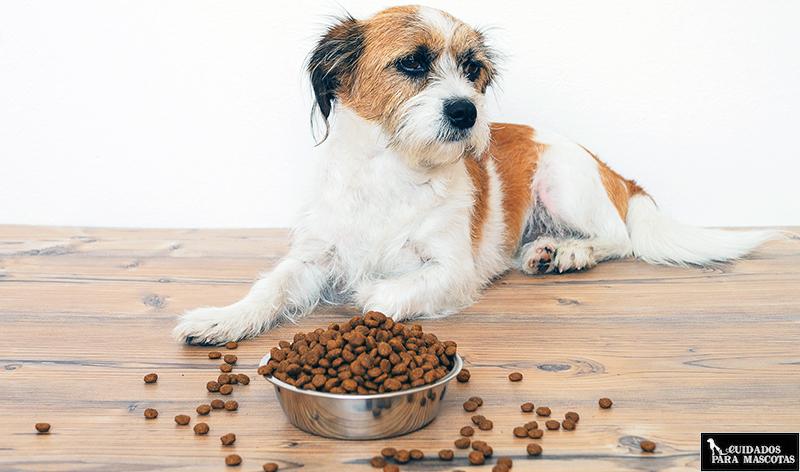 Que hacer si tu perro no come