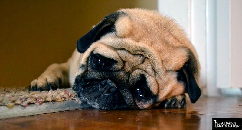 Las rutinas afectan al apetito de tu perro