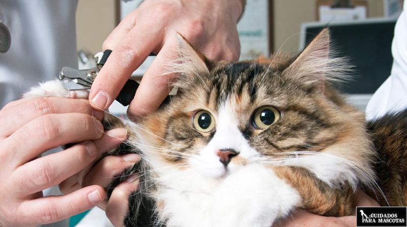 Ventajas de cortarle las uñas a tu gato