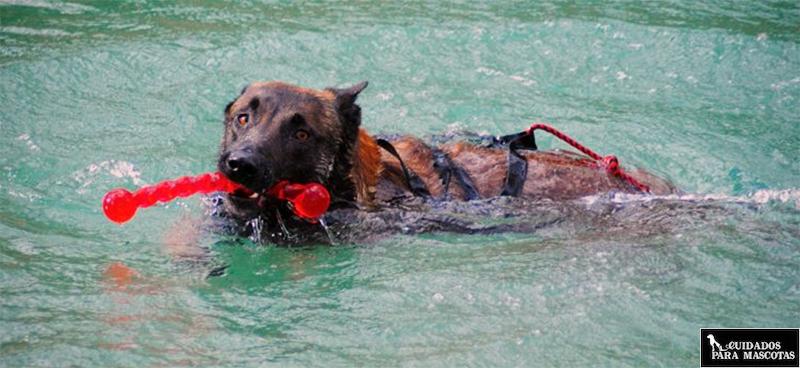 Cuerdas para perros de agua