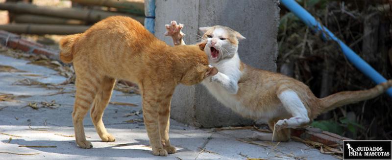 Uñas en gatos de exterior