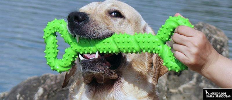 Juguetes para perros de agua que les encanta morder