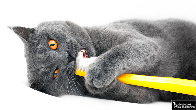 Pasta de dientes para gatos