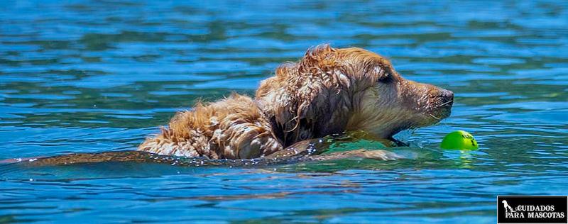 Pelotas para perros de agua