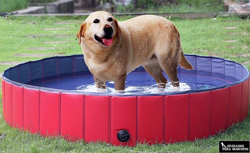 Piscinas para perros de agua