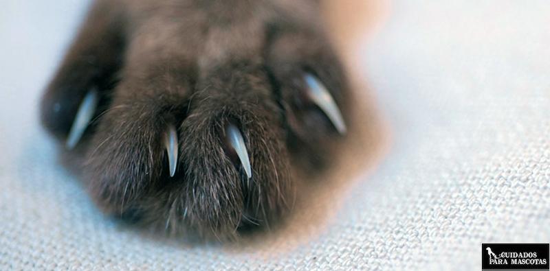 Las uñas de tu gato y su influencia en la salud