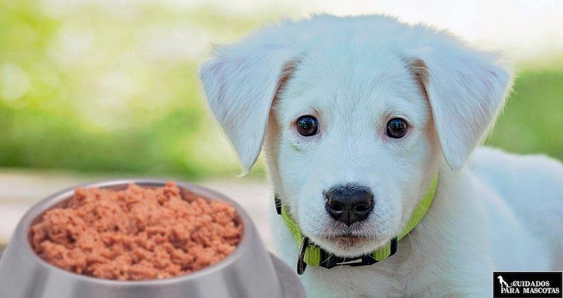 Comida húmeda para perros