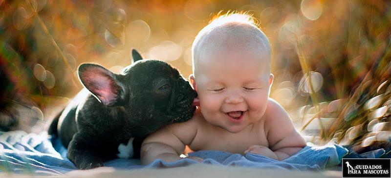 Comportamiento del bulldog francés con niños