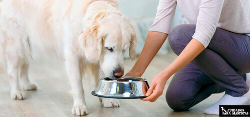 Diferencias entre comida húmeda y pienso seco para perros