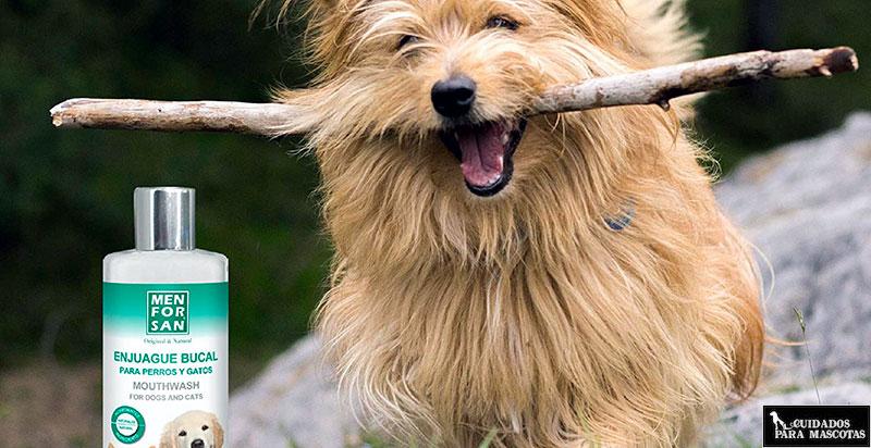 Enjuague bucal para perros adultos
