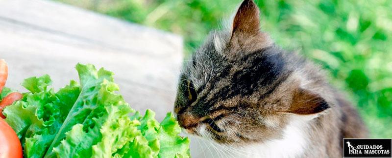 ¿Existen los gatos veganos?