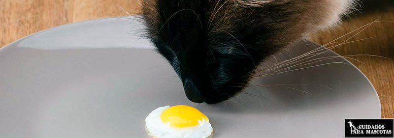 Huevo y taurina