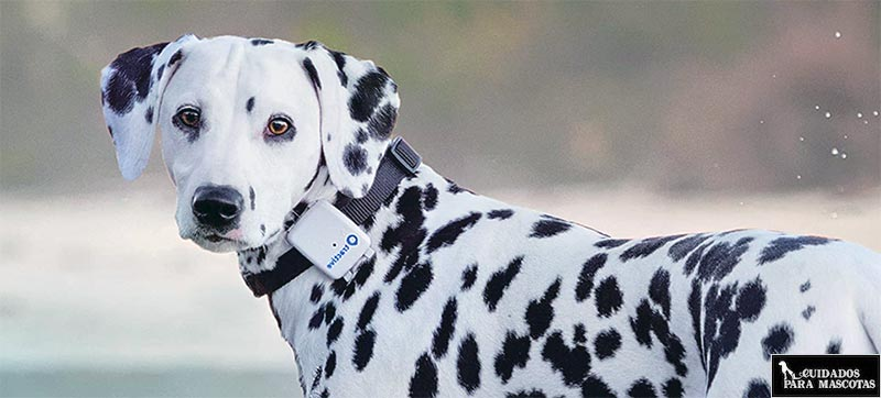 Localizador GPS para perro