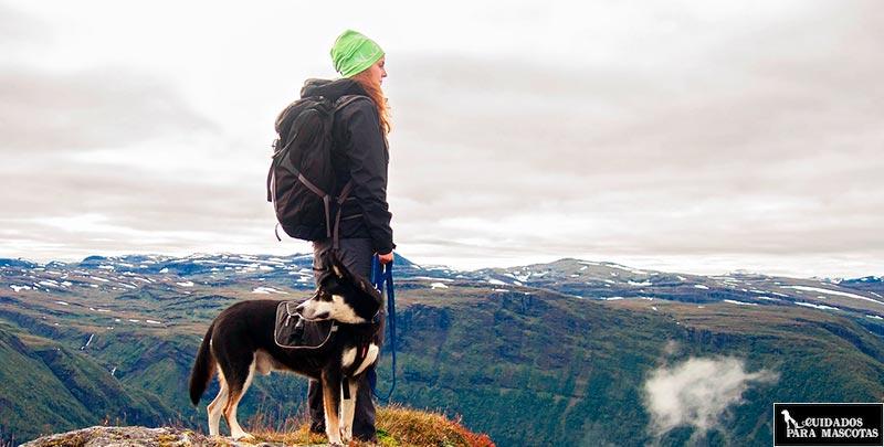 GPS para perros que hacen senderismo