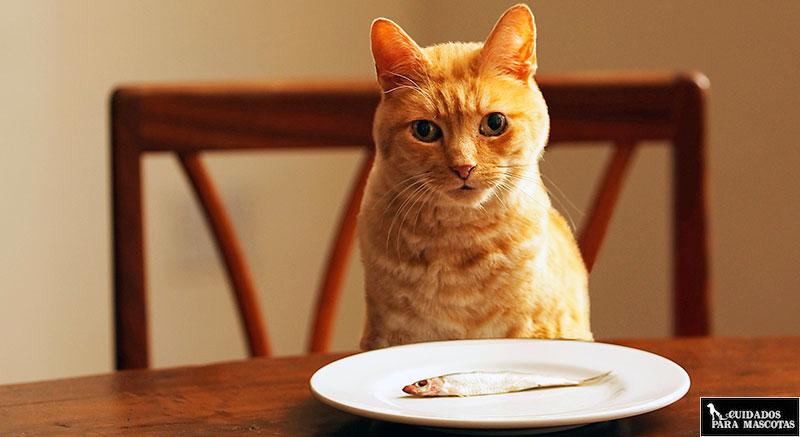 Taurina en el pescado para gatos