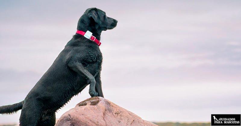 Rastreador GPS para perros