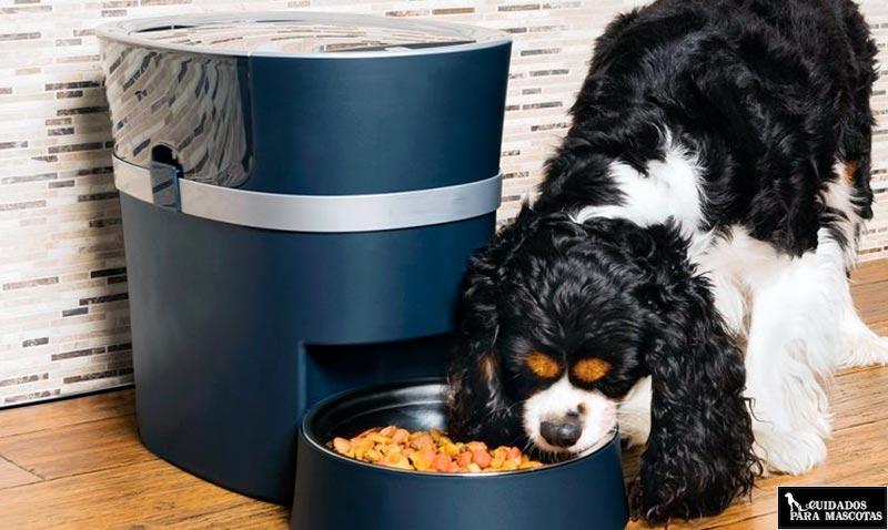 Estos son los mejores comederos programables para tu perro