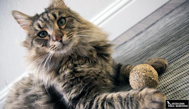 Bolas de catnip para gatos