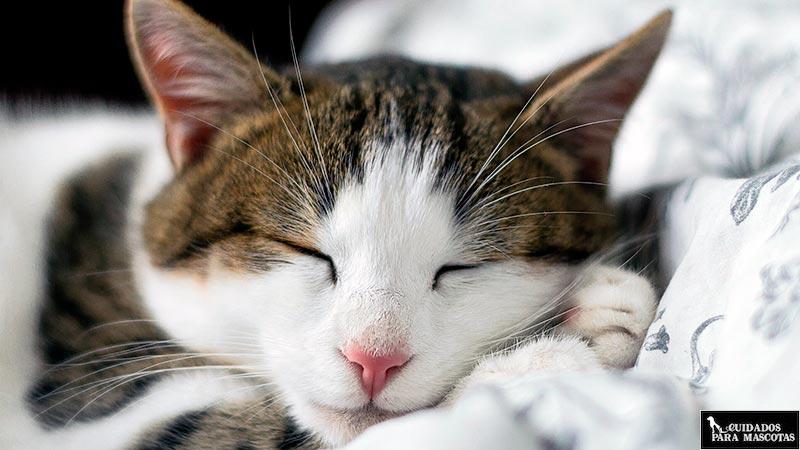 Gato durmiendo en su sitio