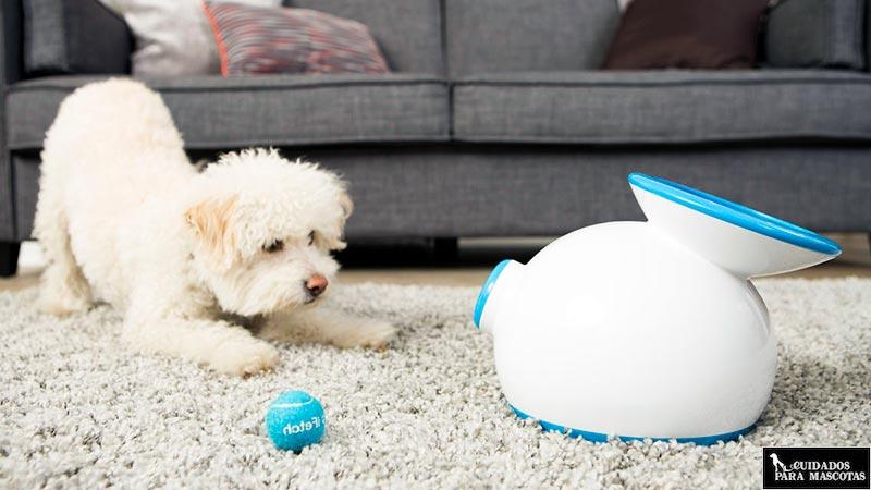 iFetch, el mejor lanzador de pelotas para perro