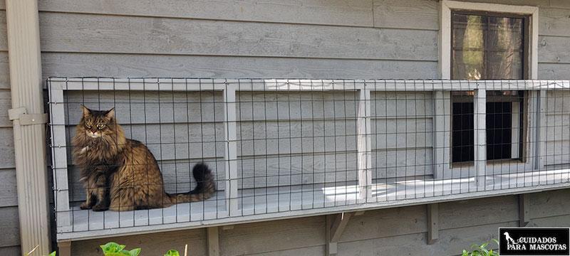 Cómo Proteger Ventanas Y Balcones Para Que Un Gato No Se Caiga
